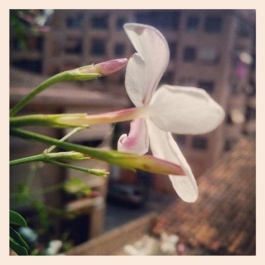 gesmiler viles florides